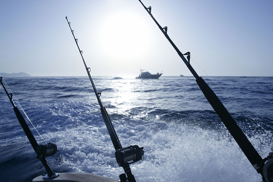 Fishing poles frozen bait fishing supplies for Saltwater fishing charters