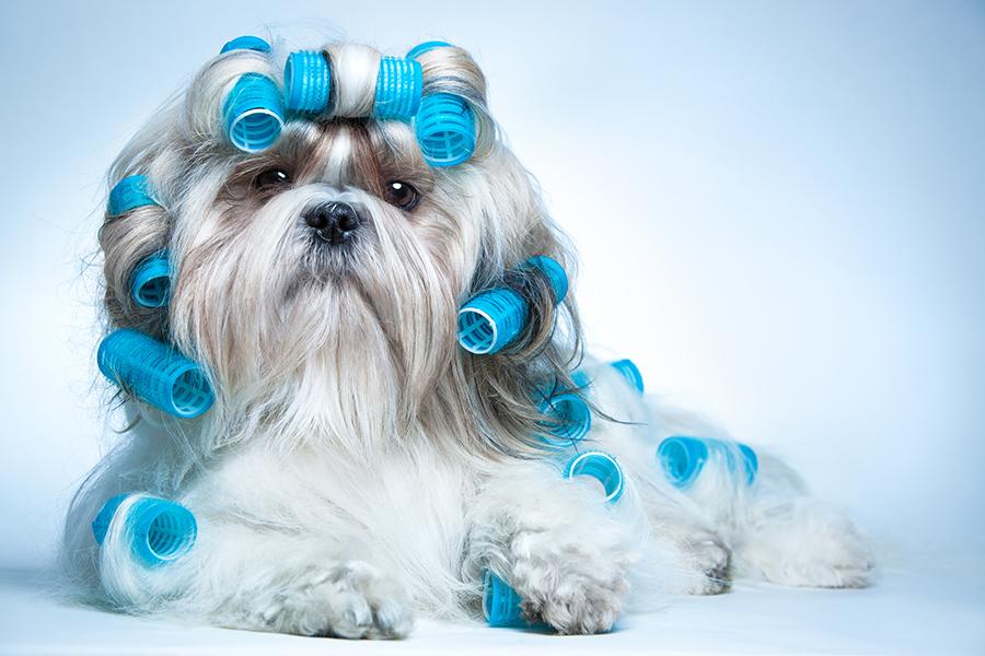 Dog Grooming Spa | Mobile Dog Grooming Vans | Mobile Dog Grooming